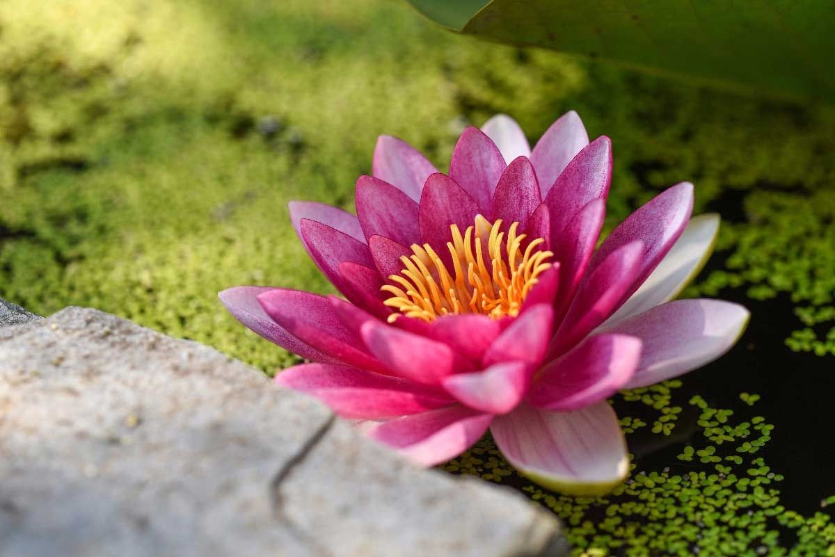 psychelic-festival-clothing-cannabis-lotus-flower