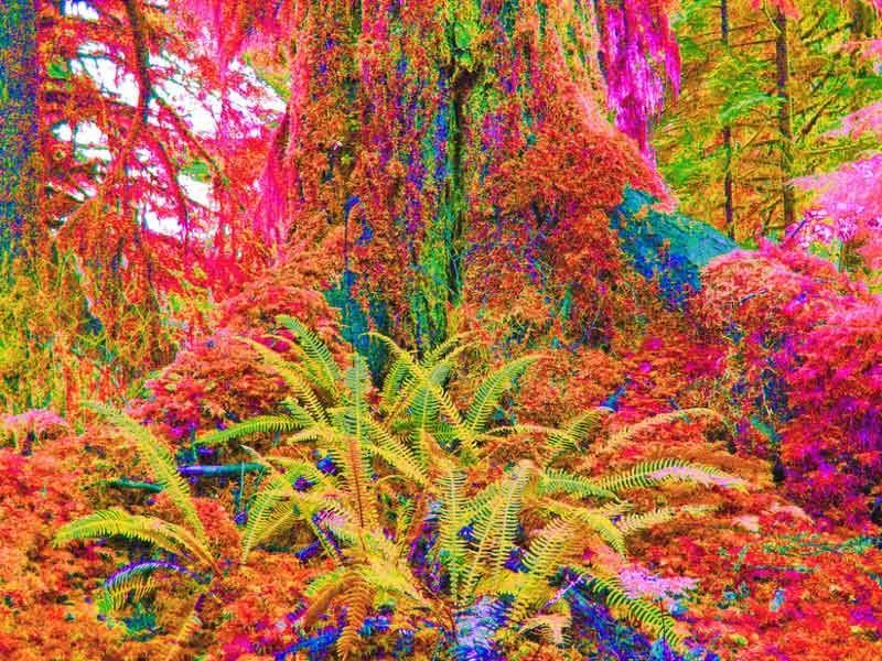 psychedelic-trance-festival-fashion-clothing-sol-seed-of-life-science-forest-on-pslocybin